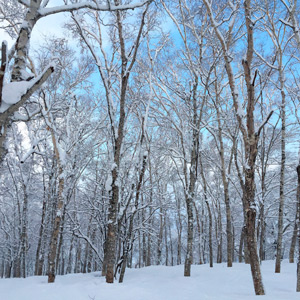 Japan - Fresh snow